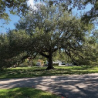 Green Gables All About Trees January 2020