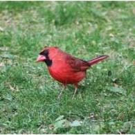 Green Gables Birds feature March 2020