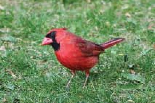 Green Gables Birds feature March 2020