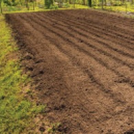 Green Gables Soil feature August 2020