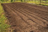 Green Gables Soil August 2020
