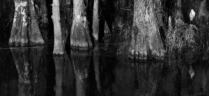 Cypress-01