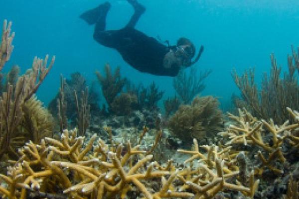 Diego Lirman Hothouse Blog article Underwater Gardening Chapter 2