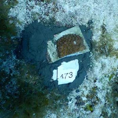 Diego Lirman Hothouse Blog article Underwater Gardengin Chapter 3