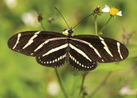 Green-Gables-2021-06-butterfly-01