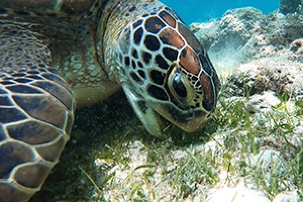 Keeping-our-Beautiful-Bay-Beautiful-Turtle-feature