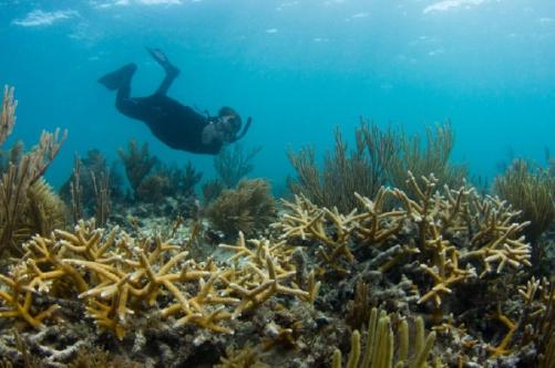 Dr. Diego Lirman coral reef 02