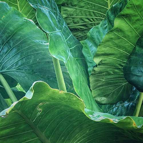 Horticulture Member Plants