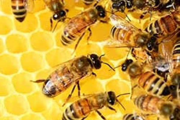 hothouse-pollinators-bees-feature