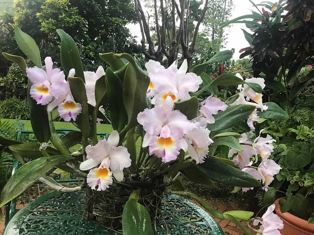 member-orchids-04