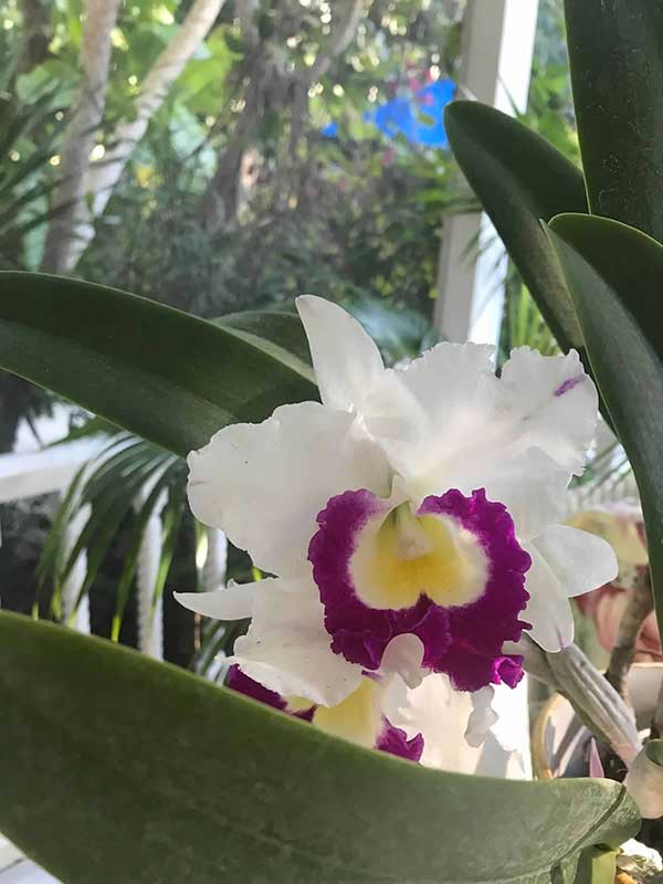 member-orchids-06