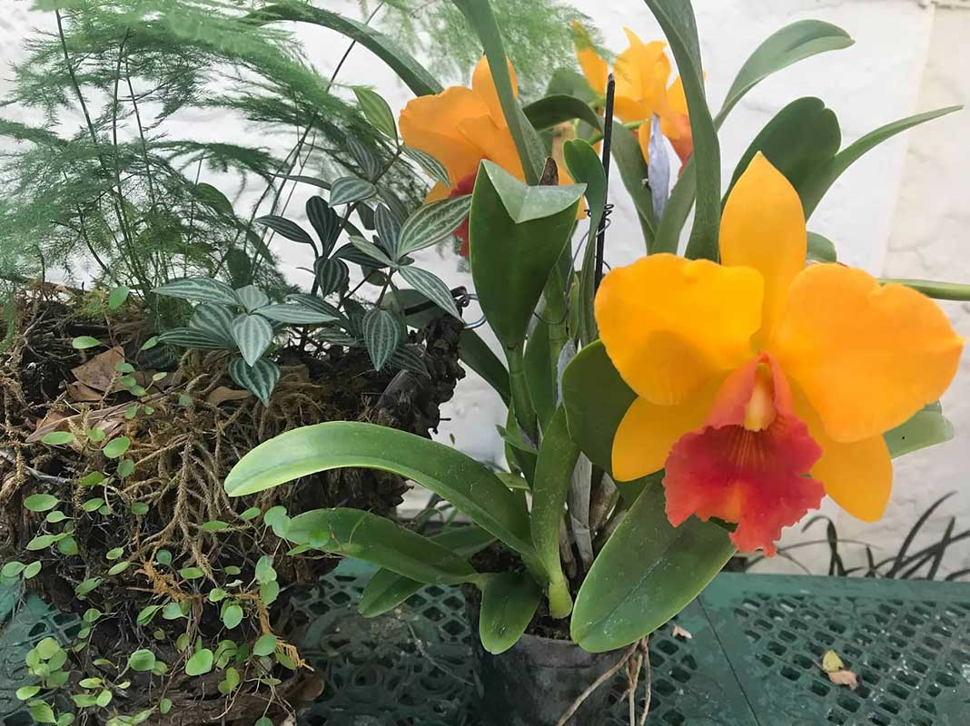 member-orchids-07