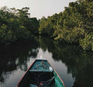 Red Mangrove Project Canoe
